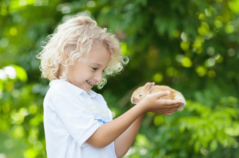 Montessori pets in the classroom